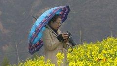 油菜花开遍地黄 安塞南沟好春光